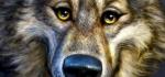 Der Wolf wurde »Best in Show«