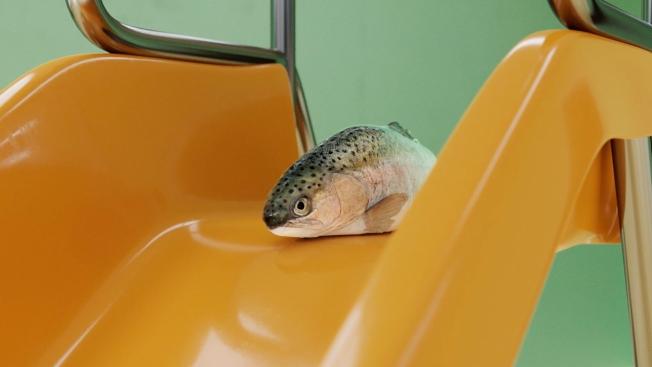 klarna-fish