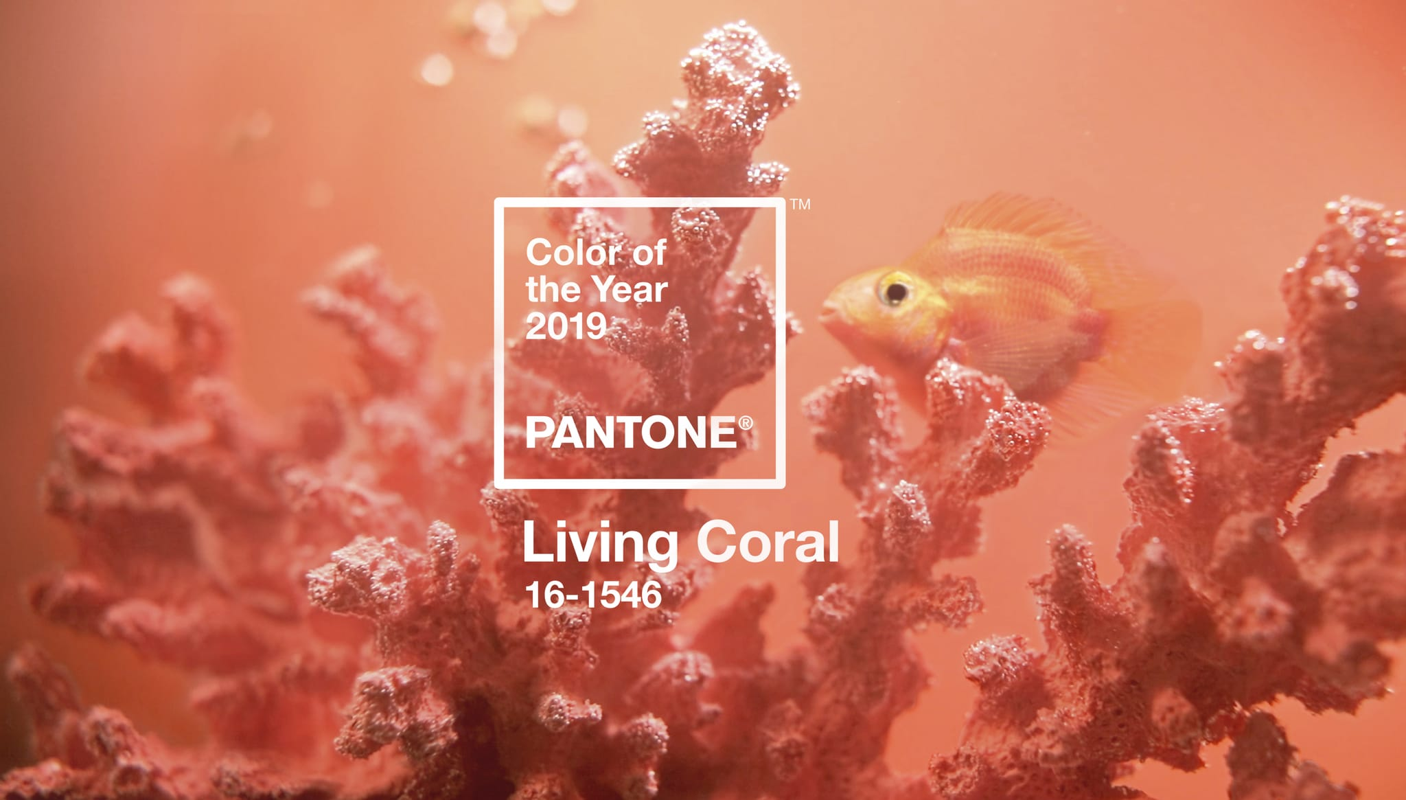 Lebensbejahender Korallenton zur Farbe des Jahres 2019 ...