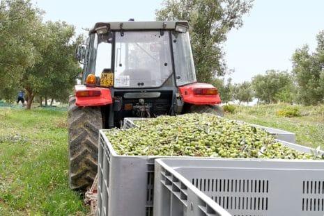 Packaging Design für Olivenöl